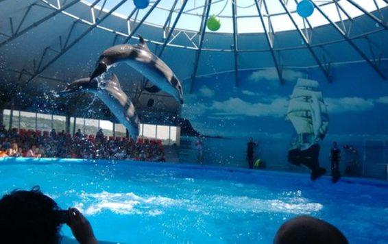 delfinarij-nemo-v-dzhubge